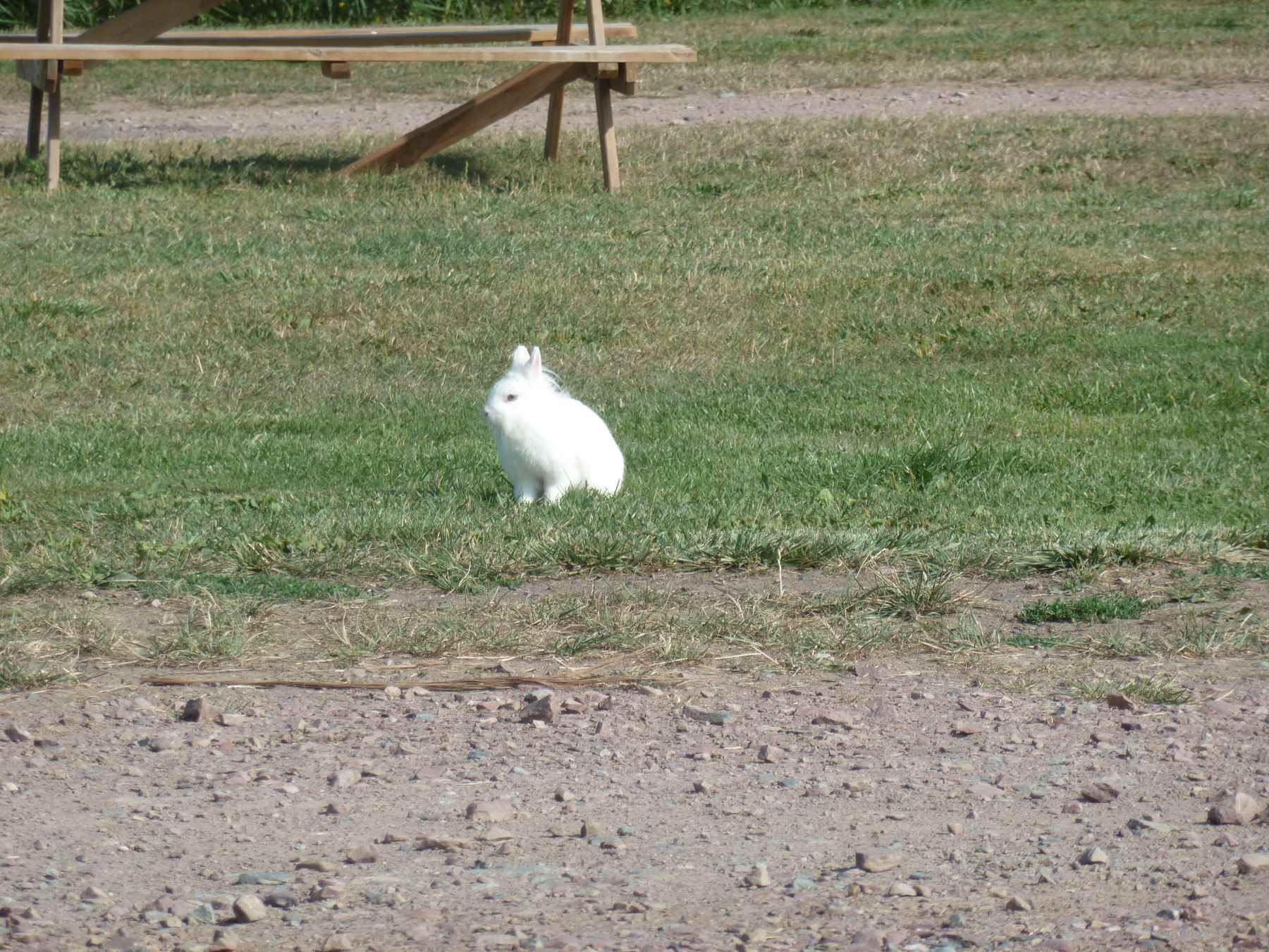 Lapin Camping Le Pont Du Hable Grandcamp Maisy Debarquement Plage Dday